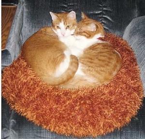 Gizmo & Simba cuddling