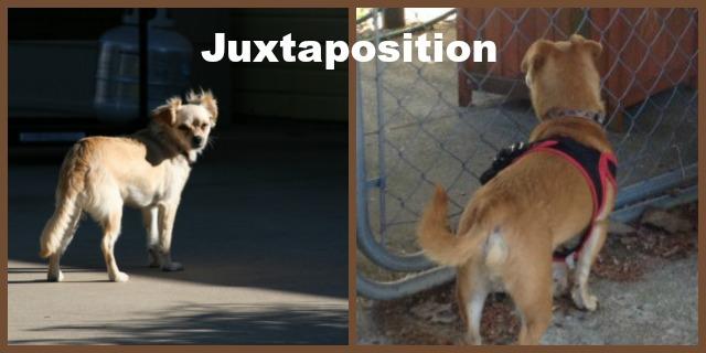 juxtaposition
