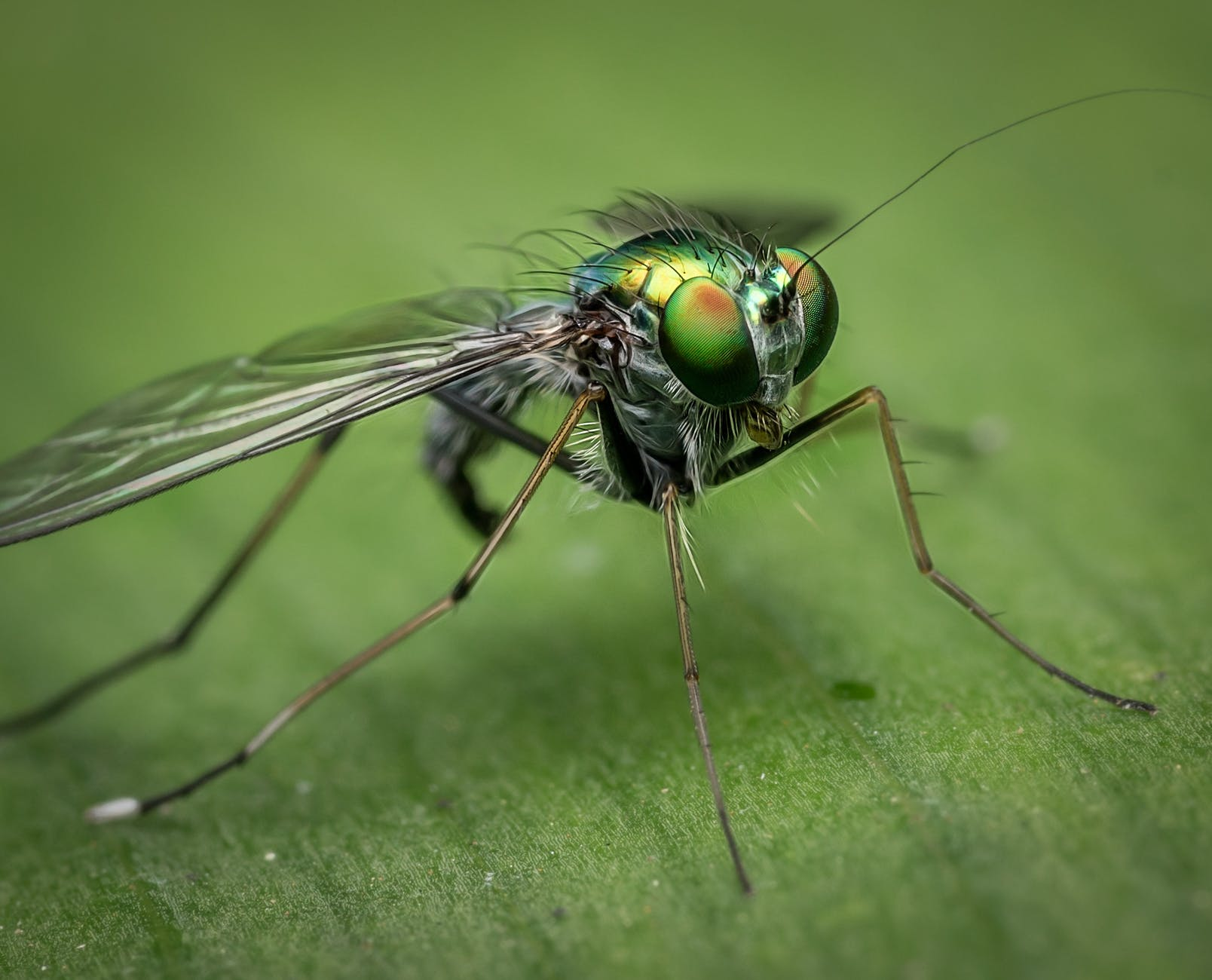 shallow focus of gray and green insect