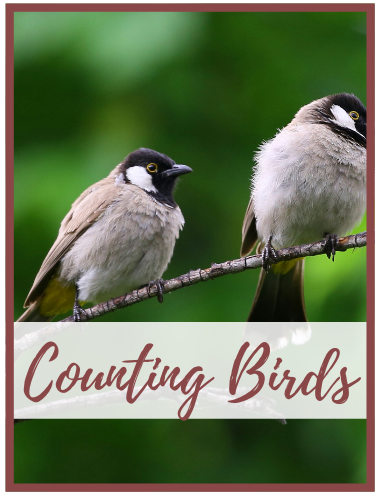bcountingbirds