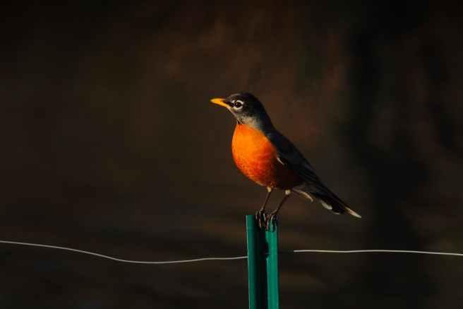 animal avian beak beautiful